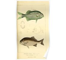 The Animal Kingdom by Georges Cuvier, PA Latreille, and Henry McMurtrie 1834  134 - Pisces Fish Poster
