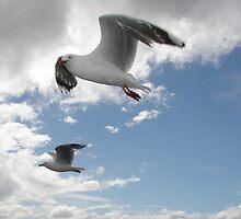 Seagulls in flight by ishtarsands