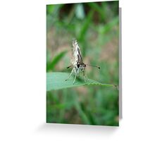 Tropical Checkered Skipper Greeting Card