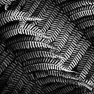 Forest Ferns by Sue Hammond