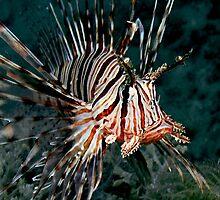 Lionfish by Marcel Botman