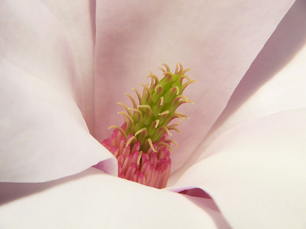 magnolia heart by VickiOBrien