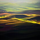 Ribbon of Light by Olga Zvereva