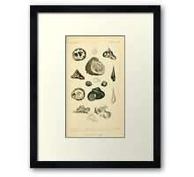 The Animal Kingdom by Georges Cuvier, PA Latreille, and Henry McMurtrie 1834  234 - Mollusca Mollusks Framed Print