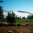 Foggy Mountain by Daniela Weil