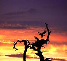 EAGLE LANDING AT SUNSET by TomBaumker