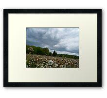 Fields of Dandelions / Dramatic  Sky  Framed Print