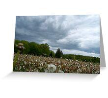 Fields of Dandelions / Dramatic  Sky  Greeting Card
