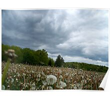 Fields of Dandelions / Dramatic  Sky  Poster