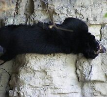 asian black bear by joedog