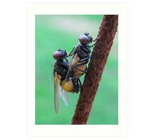Caught In The Act !! Art Print