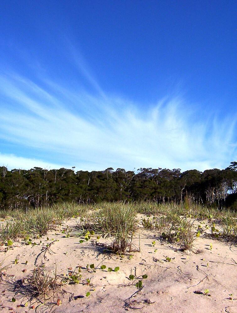 Willinga lake sand dune by melindaonleave