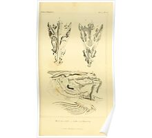 The Animal Kingdom by Georges Cuvier, PA Latreille, and Henry McMurtrie 1834  075 - Pisces Fish Poster