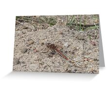 Dragonfly Variegated Meadowhawk Side Greeting Card
