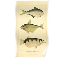 The Animal Kingdom by Georges Cuvier, PA Latreille, and Henry McMurtrie 1834  138 - Pisces Fish Poster