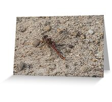 Dragonfly Variegated Meadownhawk Greeting Card