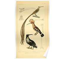The Animal Kingdom by Georges Cuvier, PA Latreille, and Henry McMurtrie 1834 691 - Aves Avians Birds Poster