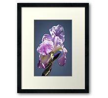 A Sky Full of Iris Framed Print
