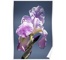 A Sky Full of Iris Poster