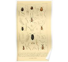 The Animal Kingdom by Georges Cuvier, PA Latreille, and Henry McMurtrie 1834  475 - Insecta Insects Poster