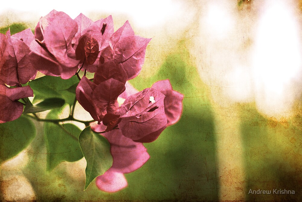 Vintage flower by Andrew Krishna