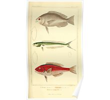 The Animal Kingdom by Georges Cuvier, PA Latreille, and Henry McMurtrie 1834  172 - Pisces Fish Poster
