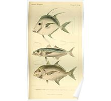 The Animal Kingdom by Georges Cuvier, PA Latreille, and Henry McMurtrie 1834  152 - Pisces Fish Poster