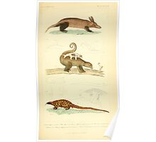 The Animal Kingdom by Georges Cuvier, PA Latreille, and Henry McMurtrie 1834 616 - Mammalia Mammals Poster
