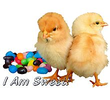 I Am Sweet! - Chicks & Jelly Beans Photographic Print