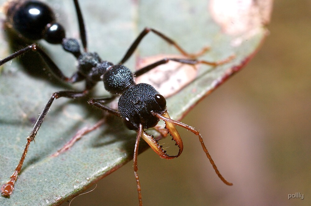 Ant by pollly