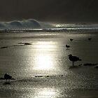Anglesea Australia by Brianna  Campbell