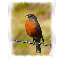 RED BREASTED ROBIN Poster