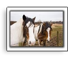 Horses on a dull day. Canvas Print