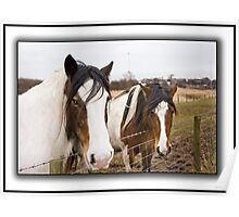Horses on a dull day. Poster