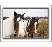 Horses on a dull day. Photographic Print