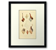 The Animal Kingdom by Georges Cuvier, PA Latreille, and Henry McMurtrie 1834  248 - Mollusca Mollusks Framed Print