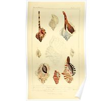 The Animal Kingdom by Georges Cuvier, PA Latreille, and Henry McMurtrie 1834  248 - Mollusca Mollusks Poster