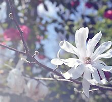 Luminous Star Magnolia by CraftyCreepers