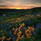 Blue and Gold Sunset by DawsonImages