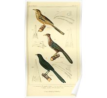 The Animal Kingdom by Georges Cuvier, PA Latreille, and Henry McMurtrie 1834 654 - Aves Avians Birds Poster