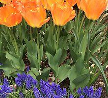Flower Garden, NYC by Lagoldberg28
