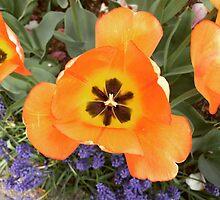 Flowers, NYC by Lagoldberg28