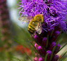 Bee with Flower by Robert Bruce Anderson