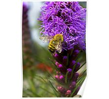 Bee with Flower Poster