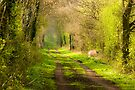 Just To Wander by CJTill