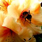 Bee by Mike Paget