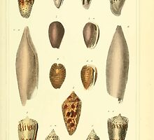 The Animal Kingdom by Georges Cuvier, PA Latreille, and Henry McMurtrie 1834  238 - Mollusca Mollusks by wetdryvac