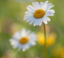 Morning dew by Lidija Lolic