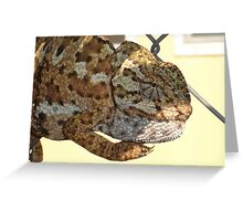 Chameleon Hanging On A Wire Fence Greeting Card