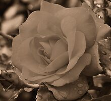 Sepia Rose by SmilinEyes